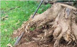 15 - What is the Significance of Stump Removal?