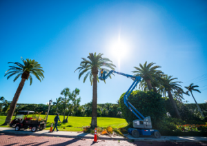 Article 8 300x212 - Achieving Success in Palm Tree Pruning